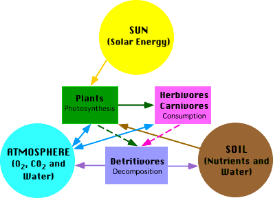 Chapter -1- Biosphere And Working of Ecosystems , Environment and Disaster Management UPSC Notes | EduRev
