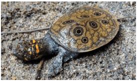 December 2020: Current Affair Environment & Ecology- 1 UPSC Notes | EduRev