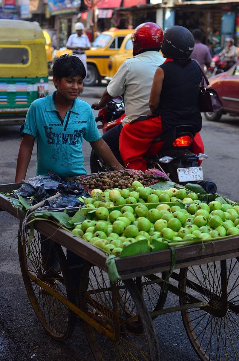 Basic Features & India : A Developing Economy UPSC Notes | EduRev