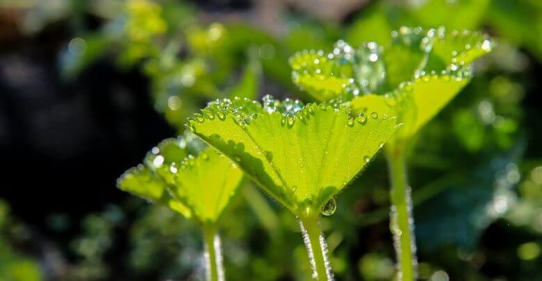 Modes of Nutrition - Nutrition in Plants Class 7 Notes | EduRev