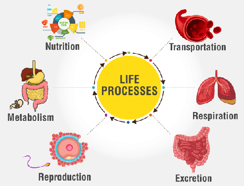 Different types of Life Processes and Nutrition Class 10 Notes | EduRev