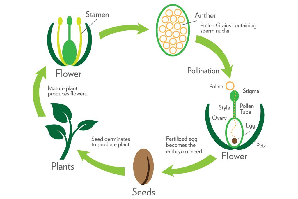 NCERT Solutions- Reproduction in Organisms NEET Notes   EduRev