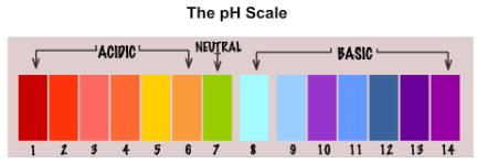 Theory & Procedure, Determine pH with pH indicator strips / universal indicator solution Class 10 Notes | EduRev