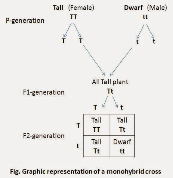 Overview of Heredity and Evolution (part -1) Class 10 Notes | EduRev