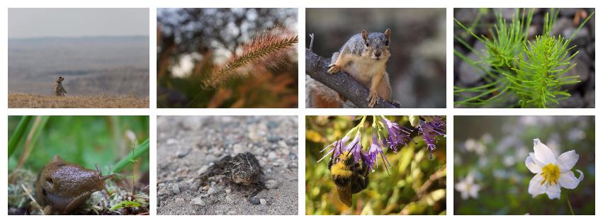 NCERT Solutions - Organisms And Populations NEET Notes | EduRev