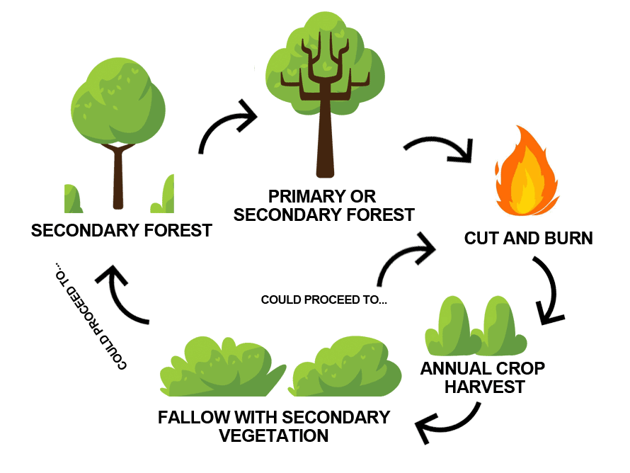 Agriculture (Part - 1) - Geography Notes   EduRev