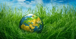 Summary, Q and A : Ch-8- The Ailing Planet: The Green Movement's Role, Hornbill English | EduRev Notes