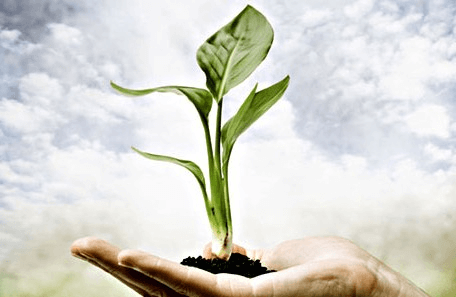 Photosynthesis (with Short Questions) - Nutrition in Plants Class 7 Notes | EduRev