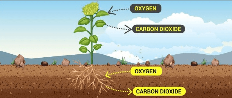 Respiration in Humans and Plants Class 10 Notes | EduRev