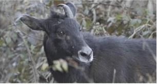 December 2020: Current Affair Environment & Ecology- 2 UPSC Notes | EduRev