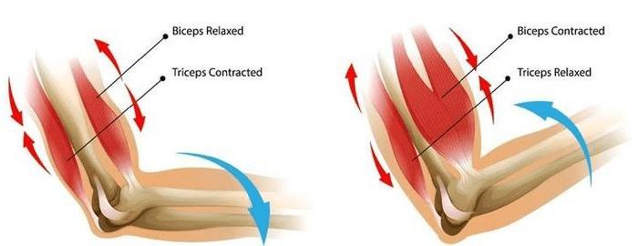 NCERT Solution - Body Movements Class 6 Notes   EduRev