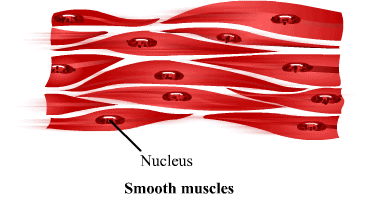 NCERT Solutions - Tissues Class 9 Notes | EduRev
