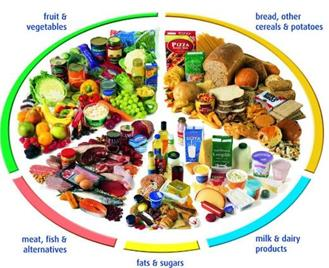 Study Notes - Components of Food Class 6 Notes | EduRev
