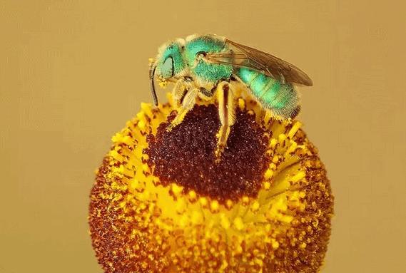 Doc: Pollen Grains NEET Notes | EduRev