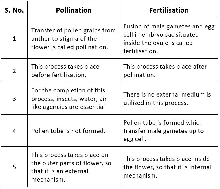 Fertilisation in Flowering Plants and Double Fertilisation Notes   EduRev