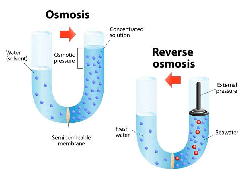 Osmosis and Osmotic Pressure Class 12 Notes | EduRev