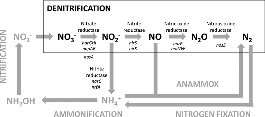 Previous Year Questions (2016-19) - Mineral Nutrition Notes | EduRev
