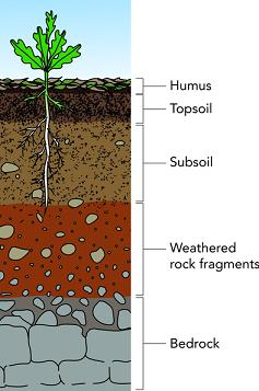 Doc: Soil - Geography Notes | EduRev