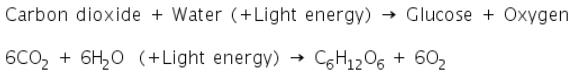Theory & Procedure, Importance of Light in Photosynthesis Class 10 Notes | EduRev
