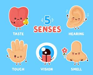 Worksheet - Super Senses Class 5 Notes | EduRev