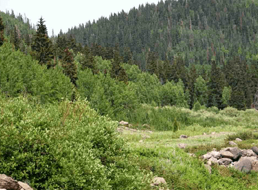 Doc: Vegetation - Geography Notes   EduRev