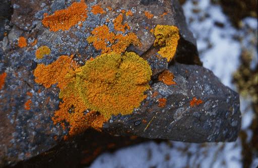 Plant Kingdom NEET Notes | EduRev