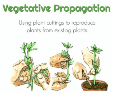 Respiration, Growth & Movement, Vernalization, Photoperiodism, Artificial Vegetative UPSC Notes | EduRev