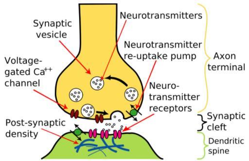 NCERT Summary: Summary of Biology- 2 UPSC Notes   EduRev
