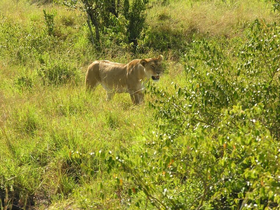 Natural Vegetation & Wildlife - Land, Soil & Water Resources Class 8 Notes | EduRev