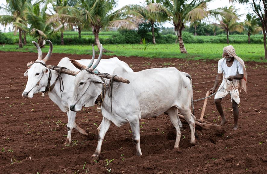 Short Answer Question (Part - 2) - Crop Production And Management Notes | EduRev