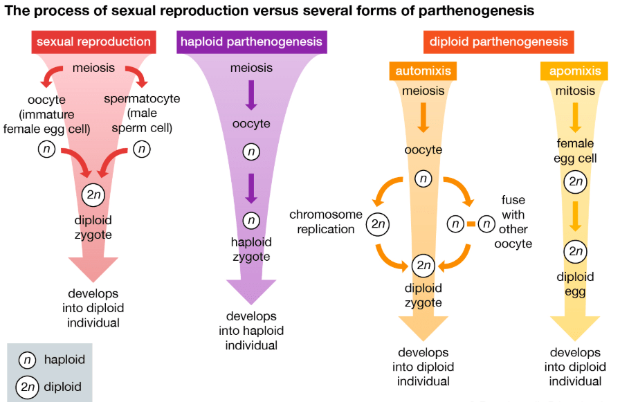 Parthenogenesis NEET Notes | EduRev