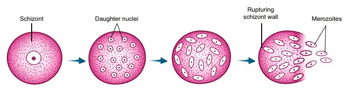 Overview of How Do Organisms Reproduce (part-1) Class 10 Notes | EduRev