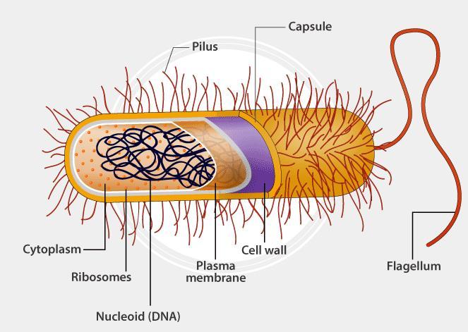 NCERT Solutions - Biological Classifications NEET Notes | EduRev
