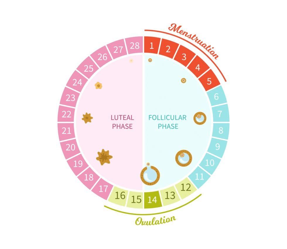 Overview of How Do Organisms Reproduce (part-2) Class 10 Notes | EduRev