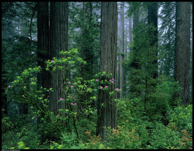 Important Questions : Natural Vegetation and Wildlife, Class 9, SST | EduRev Notes