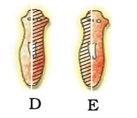 NCERT Exemplar - How do Organisms Reproduce? Notes | EduRev