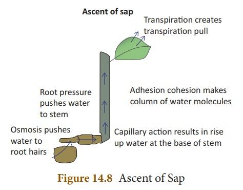 Transportation in Plants - Transportation In Plants, Class 10, Science | EduRev Notes