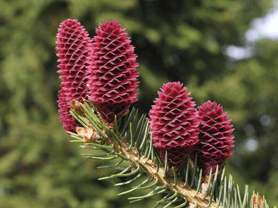 Revision Notes - Plant Kingdom NEET Notes | EduRev