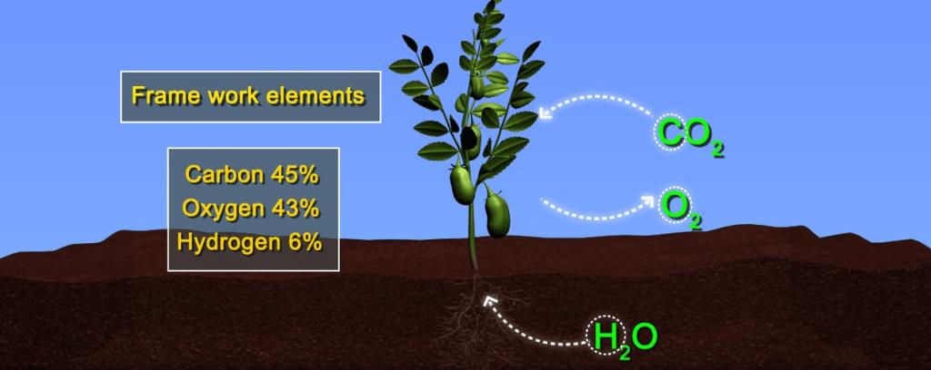 Essential Mineral Elements NEET Notes | EduRev