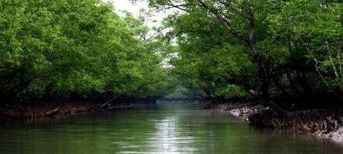 Doc: Vegetation - Geography Notes | EduRev