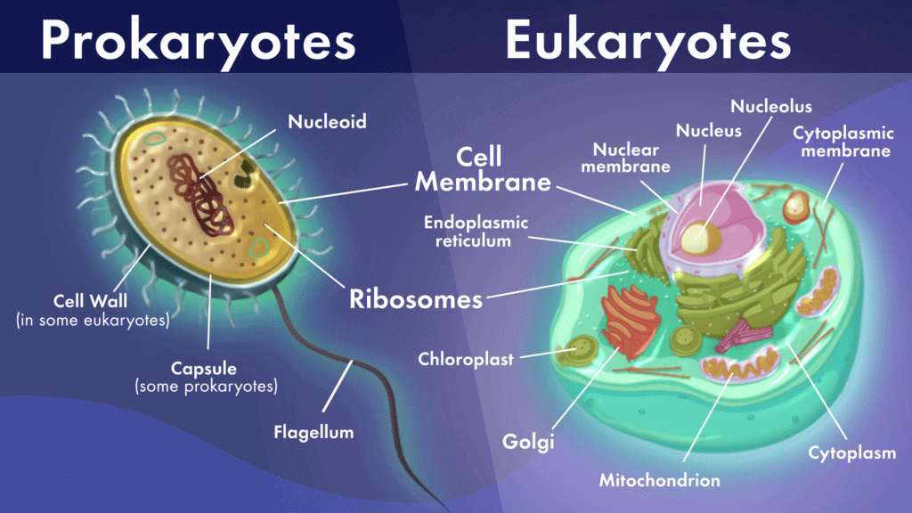 Cell, Types of Cell and Organisms Class 9 Notes   EduRev