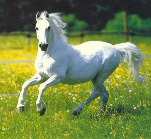 Chapter 1 - The Summer of the Beautiful White Horse, Summary, Class 11, English   EduRev Notes