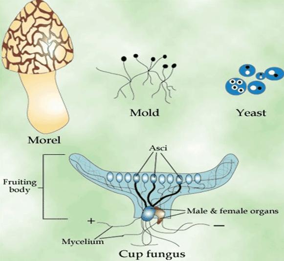 Short Notes- Microorganisms: Friend and Foe Class 8 Notes   EduRev