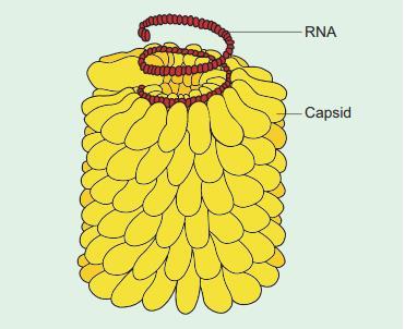 Viruses, Viroids and Lichens NEET Notes | EduRev