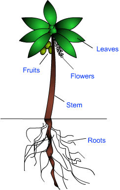 Study Notes (I) - Getting to Know Plants, Science, Class 6 | EduRev Notes
