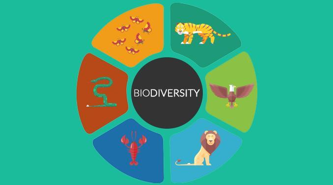 NCERT Summary: Forest & Wildlife Resources Notes   EduRev