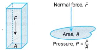 Thrust and Pressure Class 9 Notes | EduRev