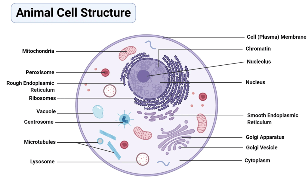 Chapter Notes - Cell : Structure and Functions Class 8 Notes   EduRev