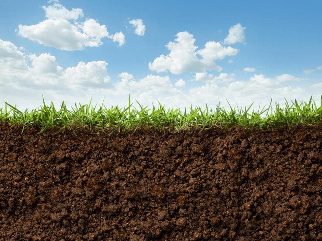 Short Notes - Land, Soil, Water, Natural Vegetation and Wildlife Resources Class 8 Notes | EduRev