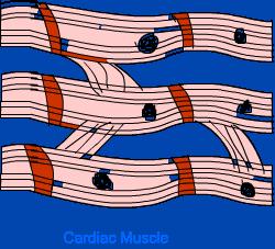Tissue - NCERT Solutions, Class 9 (IX) Science Class 9 Notes | EduRev